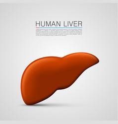 Liver sign medical object vector