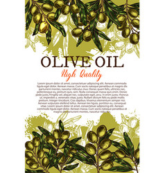 Olive oil sketch poster with green leaf and fruit vector