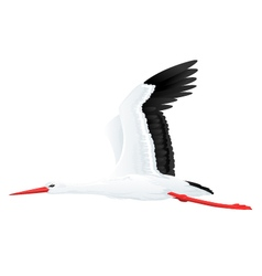 White stork flying vector