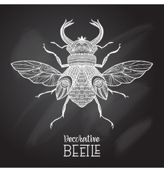 Chalkboard beetle decorative vector