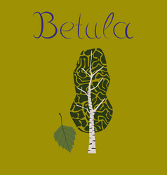 flat stylish background plant betula vector image