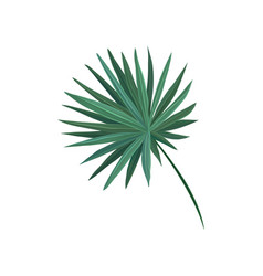 green fan palm tree leaf vector image vector image