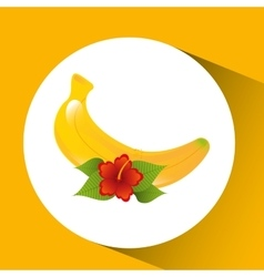 red flower and tropical banana fruit design vector image