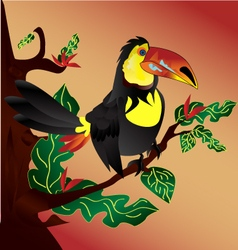 Toucan-bird vector