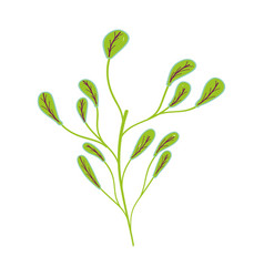beutiful plant with branch icon vector image