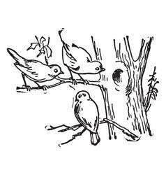 Three birds vintage vector