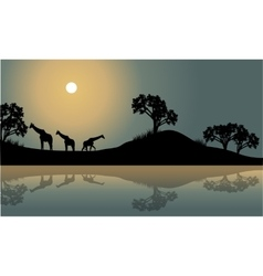 Giraffe in riverbank scenery vector image