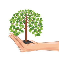 Hand holding a green tree isolated on white vector image vector image