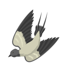 Swallow isolated bird vector