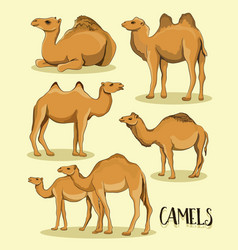 camel silhouettes set vector image vector image