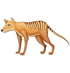 Tasmanian Tiger vector image vector image