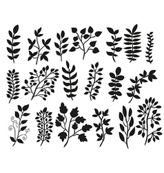 Hand drawn floral elements set vector