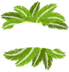 Palm branches vector
