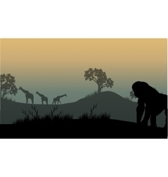 Silhouette of gorilla and giraffe vector