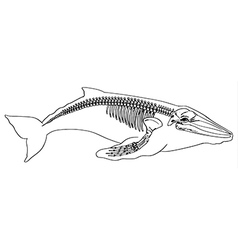 Skeleton of a whale vector image vector image