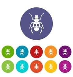 Beetle insect set icons vector