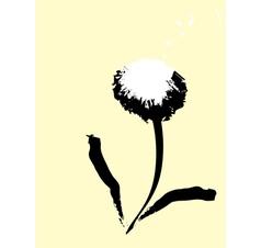 common dandelion vector image vector image