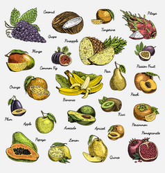 set of hand drawn engraved fresh fruits vector image vector image
