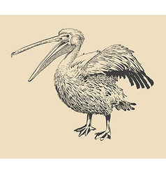 Original ink drawing of pelican vector
