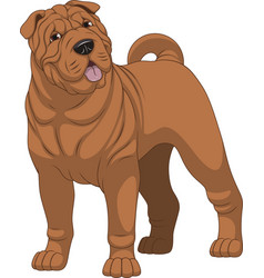 funny purebred shar pei vector image