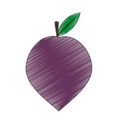 Plum fruit icon vector