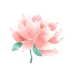 watercolor lotus flower pink vector image