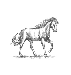 Horse in paddock isolated sketch for equine design vector