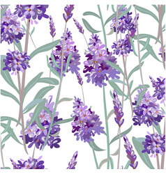 Seamless pattern with hand drawn lavender vector