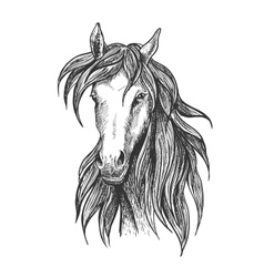 Athletic thoroughbred bay racehorse sketch symbol vector image