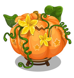 large ripe pumpkin with green leaves and flowers vector image vector image