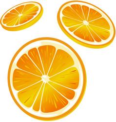 Orange slice - isolated on white background vector