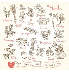 Set drawings of herbs for design menus recipes vector