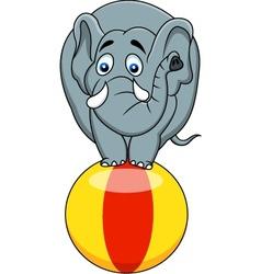 Elephant circus vector image