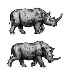 African rhino walking sketch of rhinoceros animal vector