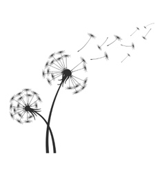 Black dandelion silhouette with wind blowing vector