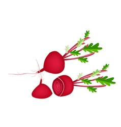 Delicious Fresh Red Beet on White Background vector image