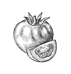 Hand drawn of tomato vector