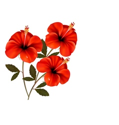 Three red flowers background vector image