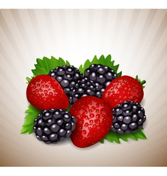 strawberry and blackberry vector image