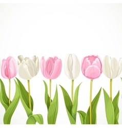 Pink and white flowers tulips seamless vector