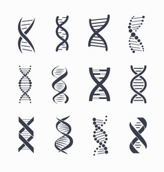 Dna different icons set on vector