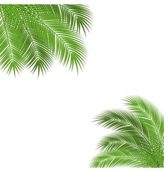 Palm branch frame vector