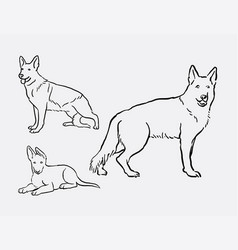 german shepherd dog pet animal sketches vector image vector image