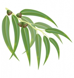 Eucalyptus branch vector