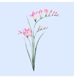 Watercolor pink freesia flower vector
