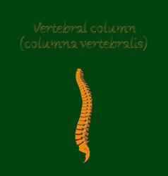 Human organ icon in flat style vertebral column vector