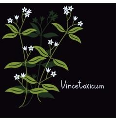 Vincetoxicum hirundinaria plant vector image vector image