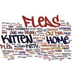 Fleas and your kitten text background word cloud vector
