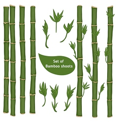 Set of bamboo branches vector image