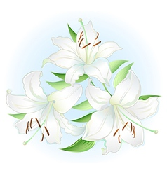 White lilly vector